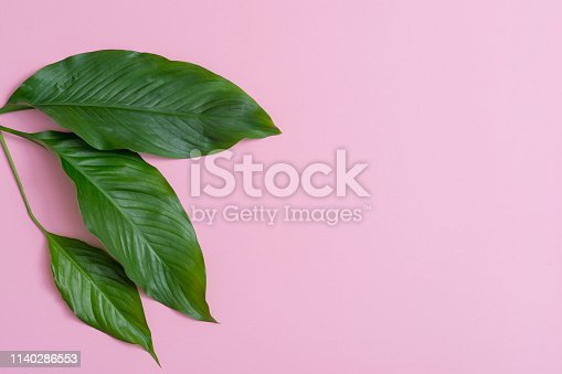 666980960 istock photo Tropical leaves on pink background a space for text. Top view, flat lay 1140286553
