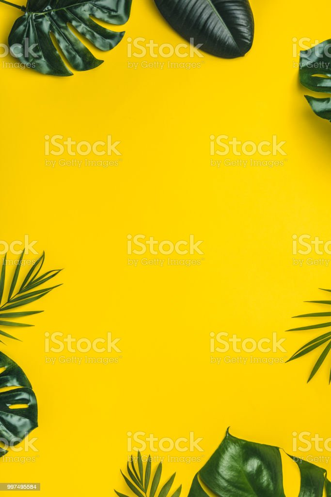 Tropical leaves on yellow background stock photo