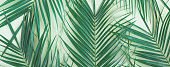Tropical leaves palm tree on a mint background with space for text.