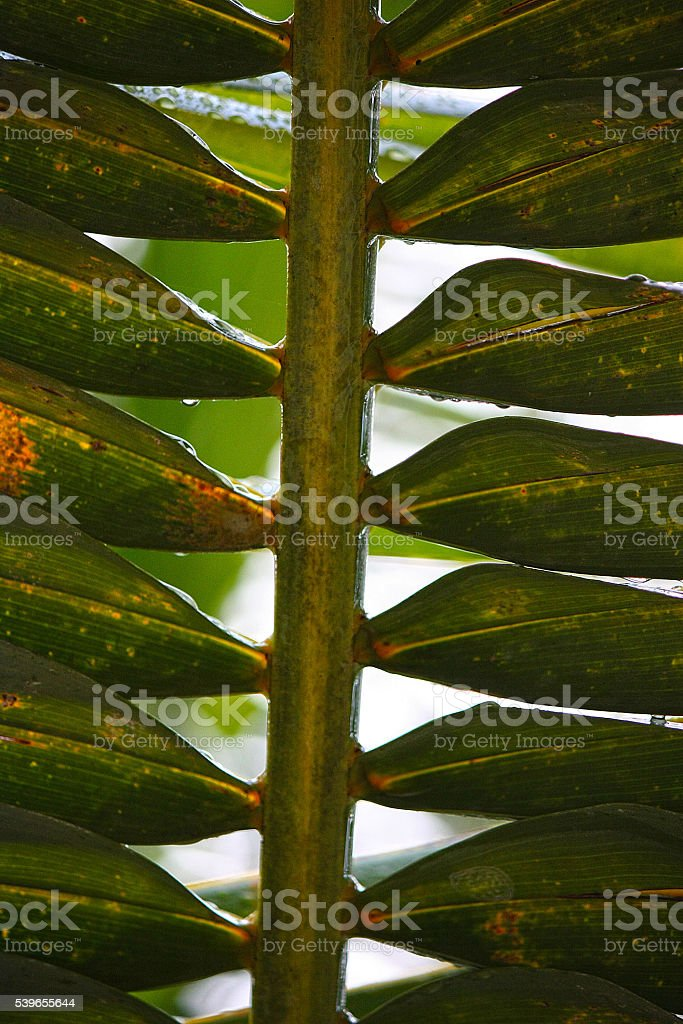 Tropical Leaves stock photo