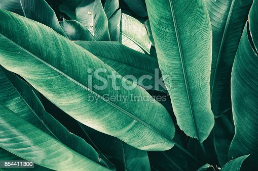 istock tropical leaves 854411300