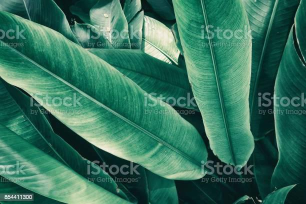 Tropical leaves picture id854411300?b=1&k=6&m=854411300&s=612x612&h=dzr4gzc8wjhn55kwxvpzs7kvpakjgbpmw97pzwhjibc=