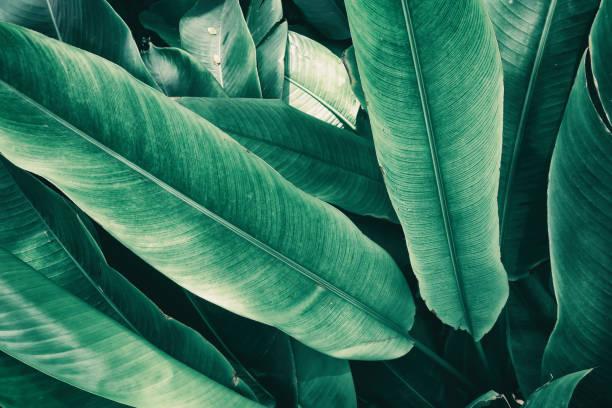 Tropical leaves picture id854411300?b=1&k=6&m=854411300&s=612x612&w=0&h=tjatnkbdprhqax5lxuq9fwvpso2mcylaqwsy5trogtu=