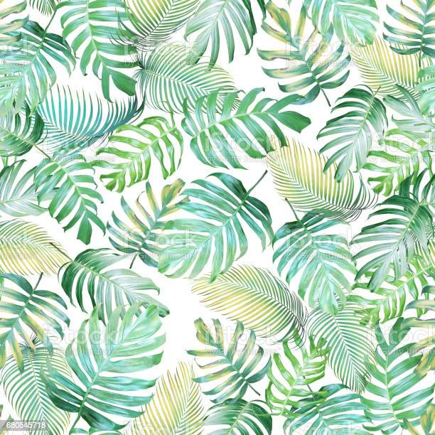 Tropical leaves seamless pattern of monstera philodendron and palm picture id680545718?b=1&k=6&m=680545718&s=612x612&h=qnmv ftygioo7vimq qcsflm3cnfdqjxud20doz vly=