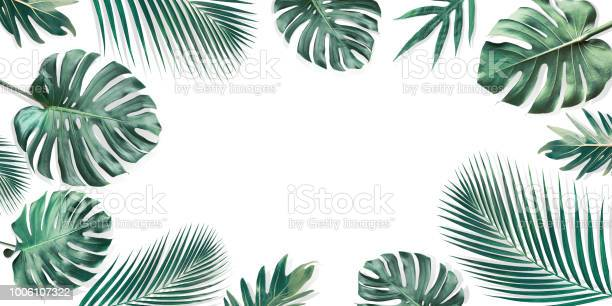 Tropical leaves set with white copy space backgroundnature and summer picture id1006107322?b=1&k=6&m=1006107322&s=612x612&h=q1izqvprm9khsse2kkenkgsfixmmg8uzykx ixmhlzq=