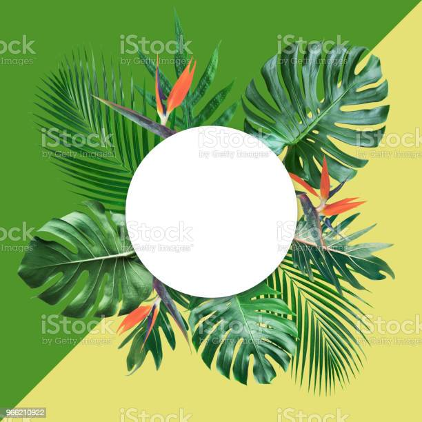 Tropical leaves with white copy space and color pastel background picture id966210922?b=1&k=6&m=966210922&s=612x612&h=nia09mgcav9gyw8sw0svzrcifktekvsl2 oml0s4p0y=