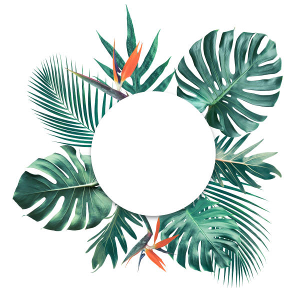 Tropical leaves with white copy space background.Nature and summer concepts Tropical leaves with white copy space background.Nature and summer concepts ideas exoticism stock pictures, royalty-free photos & images