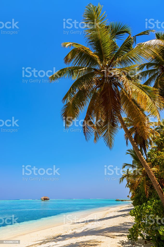 Tropical Ilha Maldivas foto de stock royalty-free