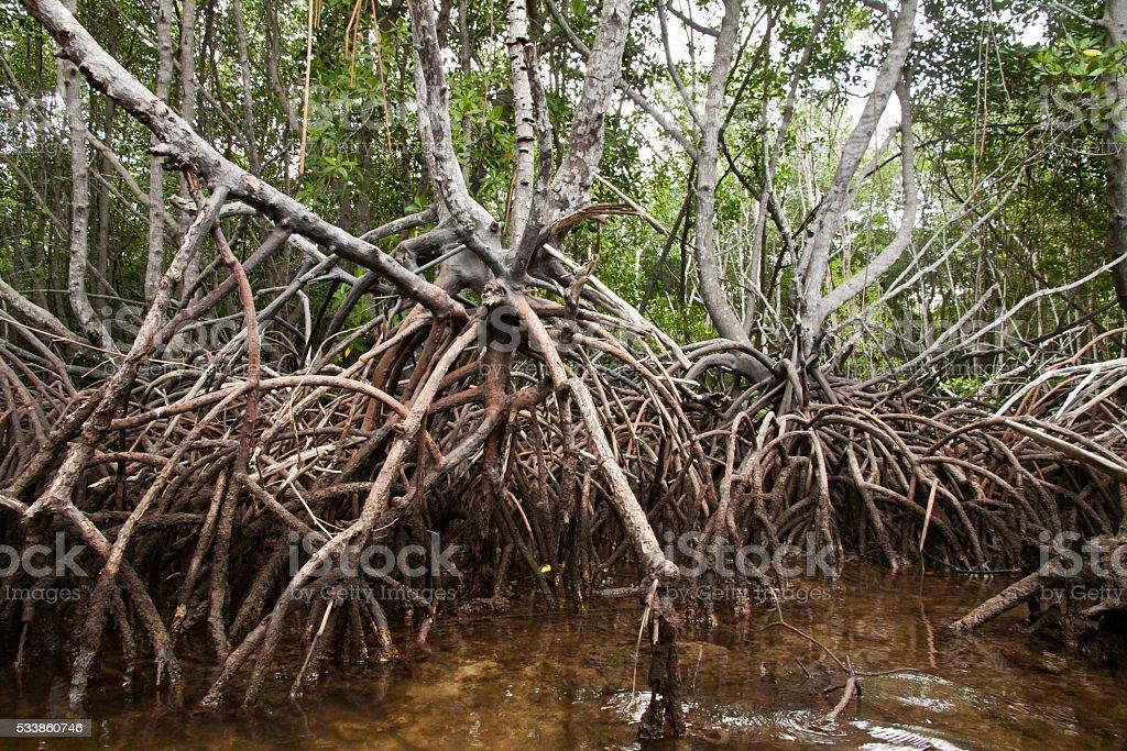 Tropical Mangroves exploring with a kayak Nusa Lembongan, Indonesia stock photo