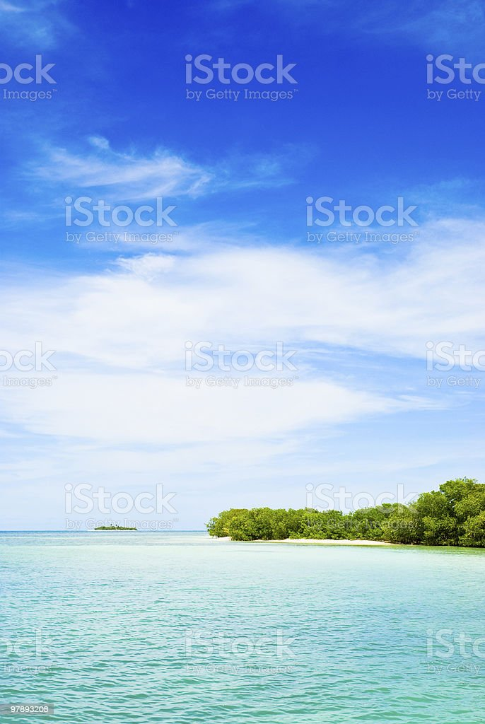Tropical Mangroves royalty-free stock photo