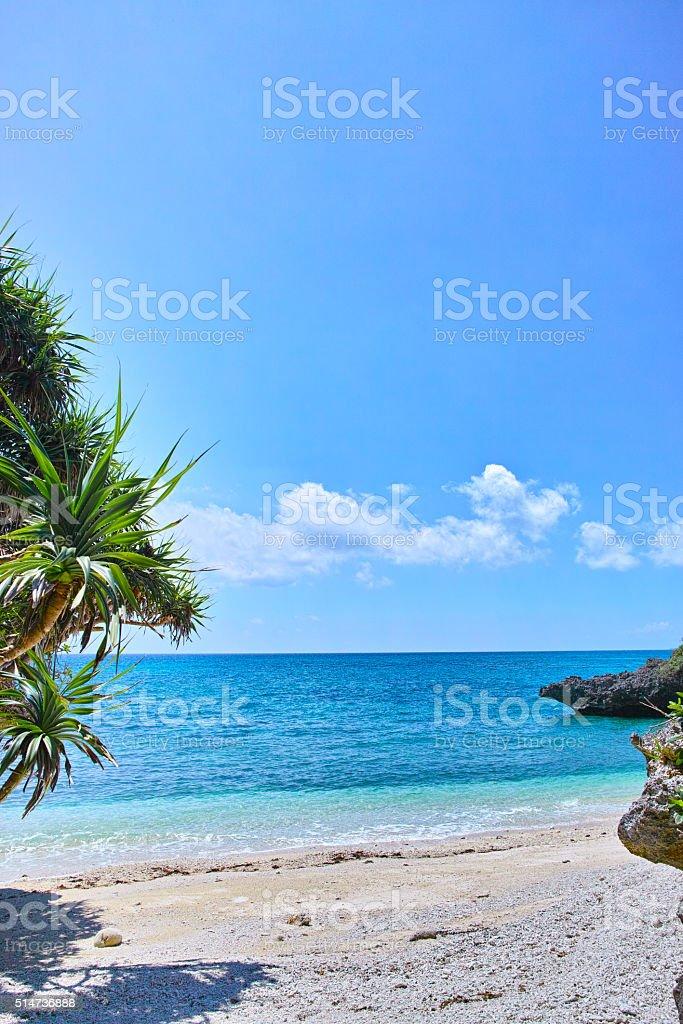 Tropical Miyakojima Adan trees and a private beach stock photo