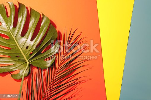 Tropical monstera and palm leaves on trendy colorful background. Top view.