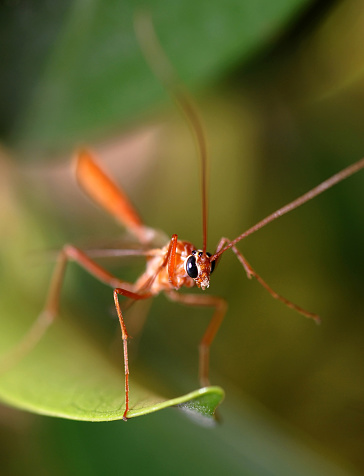 Tropical Mosquito Stock Photo - Download Image Now