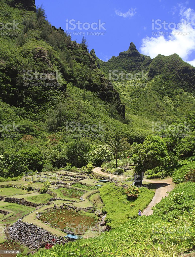Tropical mountain and taro field garden scenic on Kauai Hawaii stock photo
