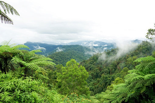 Tropical mountain range view. View of Moving Clouds And Fog over Titiwangsa mountain range . View of High Humidity Jungle Rainforest at Royal Belum State Park jungle in Malaysia.