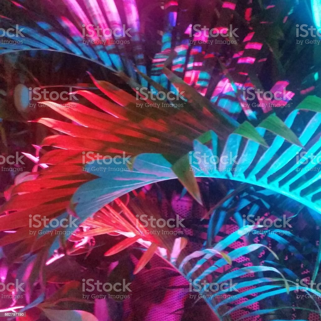 Tropical Multicolored Palm Trees in Miami at Night stock photo