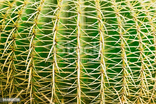 Tropical natural green cactus texture. Abstract natural pattern texture, exotic prickly background