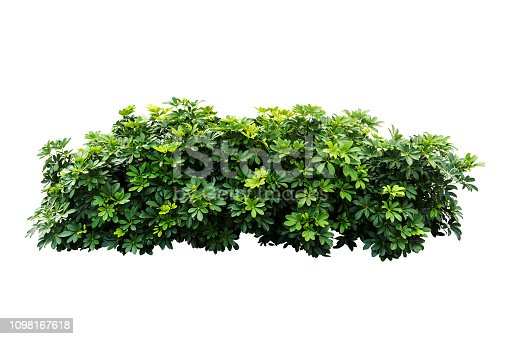 tropical nature green plant isolated include clipping path