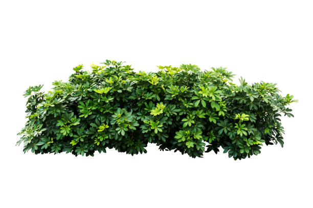 tropical nature green plant isolated include clipping path - lush foliage stock pictures, royalty-free photos & images