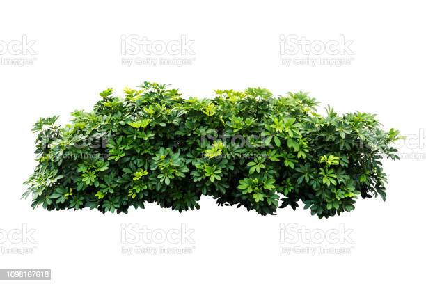 Photo of tropical nature green plant isolated include clipping path