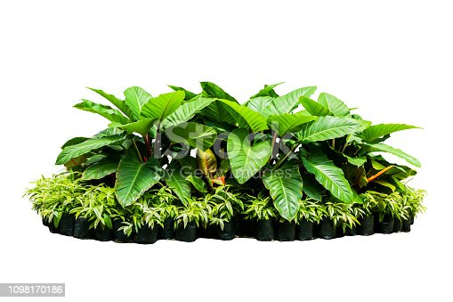 istock tropical nature green plant isolated include clipping path 1098170186
