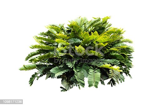 istock tropical nature green plant isolated include clipping path 1098171236