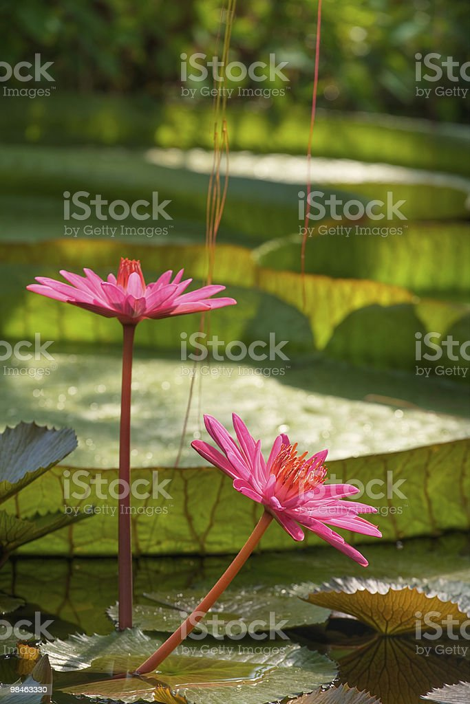 Tropical nature royalty-free stock photo