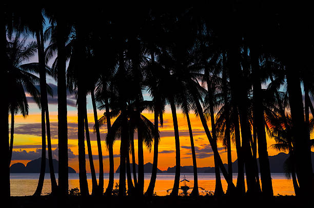 Tropical night with silhouettes of palm trees. Equator. Tropical Island. View from the depths of the jungle to the beach-side, sunset and ocean views. Photographer is located deep in the jungle. pinagbuyutan island stock pictures, royalty-free photos & images
