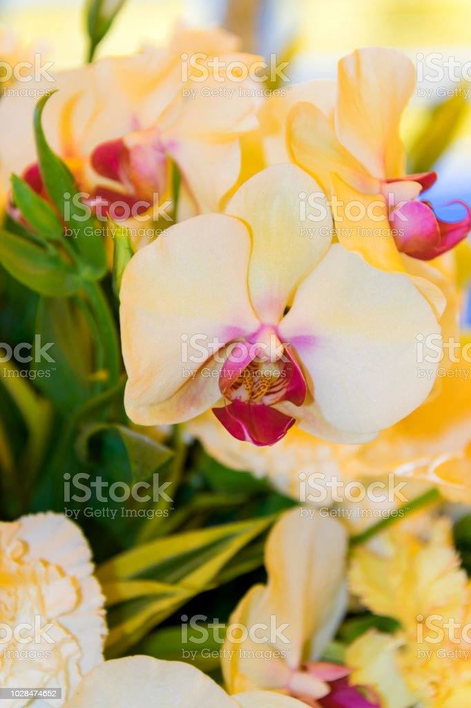tropical orchid in Guatemala latin America. stock photo