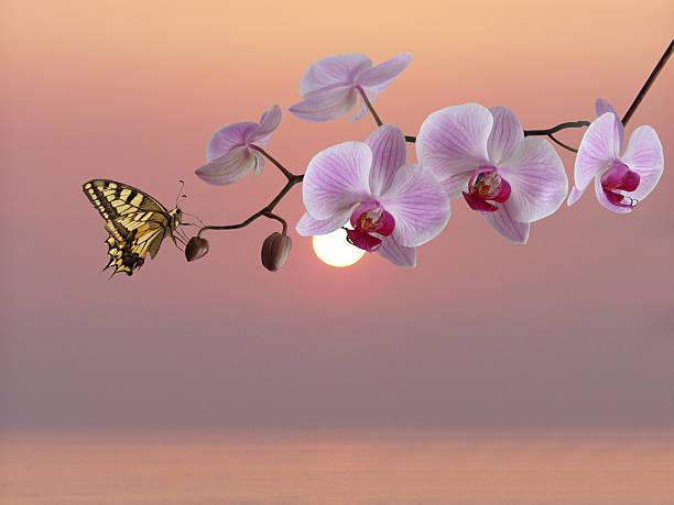 Tropical orchid picture id114388112?b=1&k=6&m=114388112&s=612x612&w=0&h=xnankq17owjj9 mcf3tfinc4dbkinagi9tcaqvn  sa=