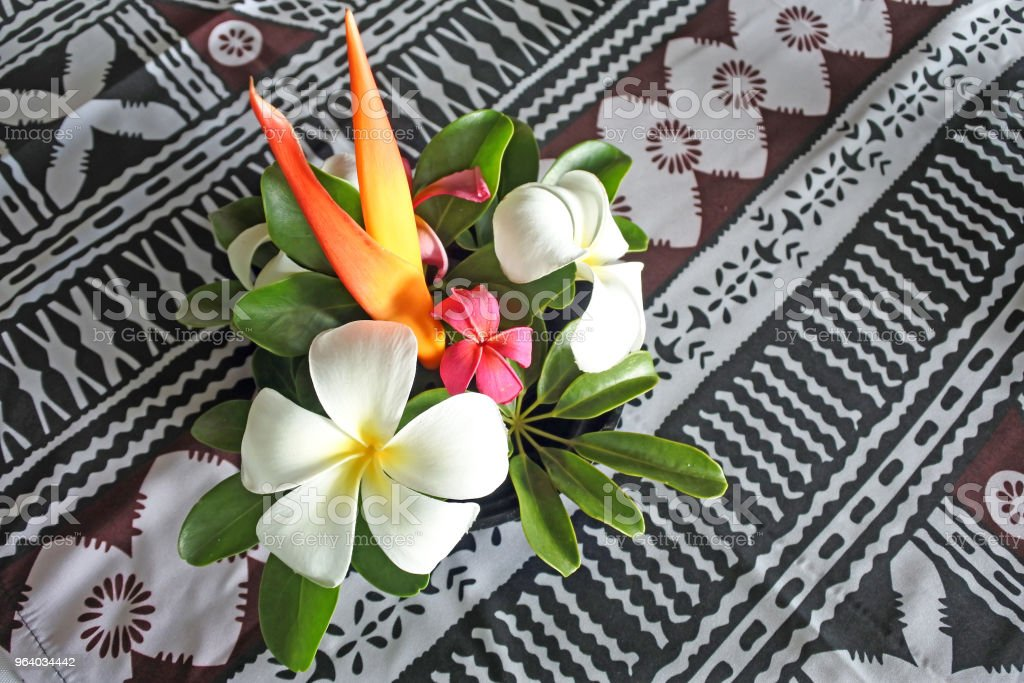 熱帯太平洋諸島の花ボケ フィジー - カップルのロイヤリティフリーストックフォト