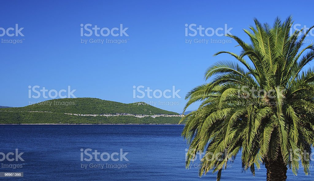 Tropical Palm and Adriatic royalty-free stock photo