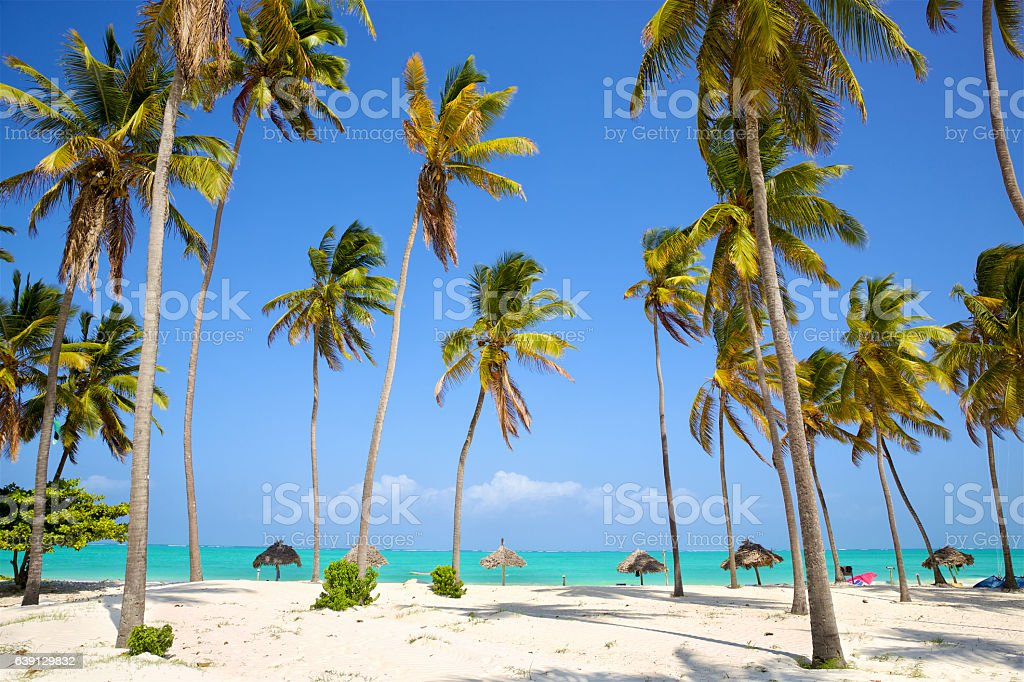 Tropical palm and sand beach stock photo