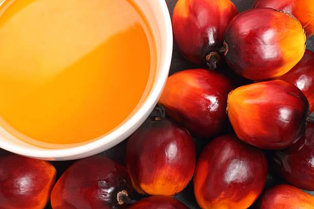 frutos de palma, óleo de cozinha - oleo palma imagens e fotografias de stock