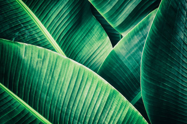 tropical palm leaf, dark green toned - foliate pattern stock photos and pictures