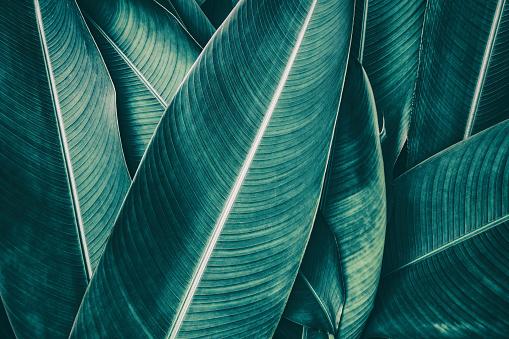 열 대 종 려 잎 진한 녹색 톤 0명에 대한 스톡 사진 및 기타 이미지