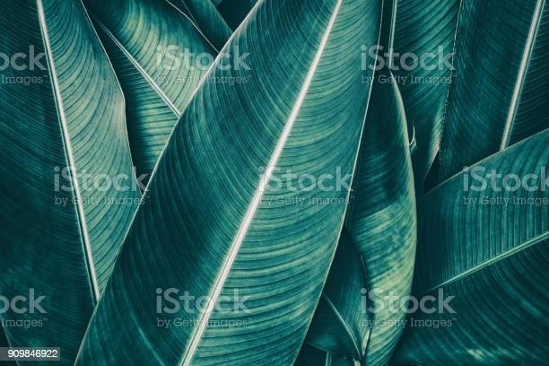 Photo of tropical palm leaf, dark green toned