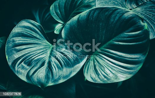 909846922 istock photo tropical palm leaf, dark nature background, blue toned 1032377826