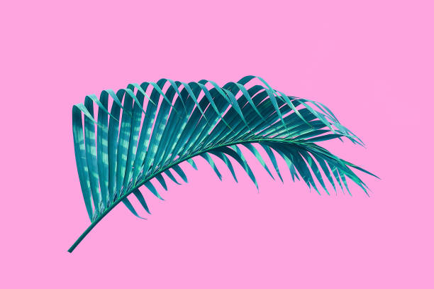tropical palm leaf isolated pink background with clipping path for design elements - foto stock
