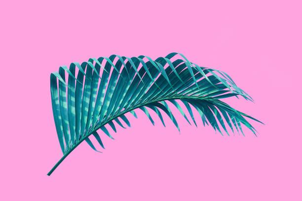hoja de Palma tropical aislado fondo rosa con trazado de recorte para elementos de diseño - foto de stock
