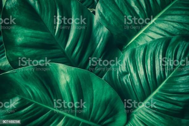 Tropical palm leaf picture id907469256?b=1&k=6&m=907469256&s=612x612&h=oilia 4kmsnyi5ea nesgwcjpcrusjy sk52qg2wlq4=