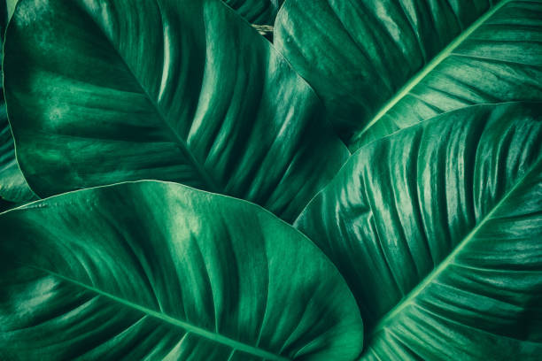tropical palm leaf - botany stock pictures, royalty-free photos & images