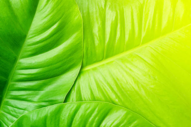 tropical palm leaf - foliate pattern stock photos and pictures