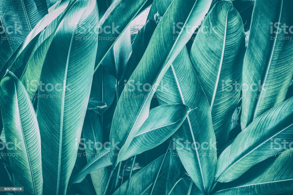 tropical palm leaf stock photo