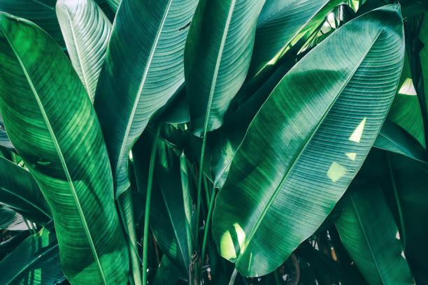 tropical palm leaf stock photo