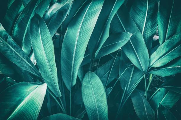 tropischen palm leaf - blumenstreifen stock-fotos und bilder