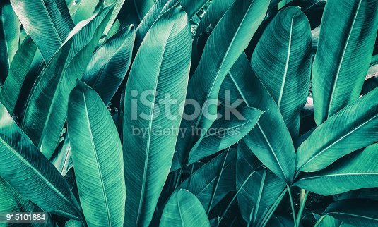 istock tropical palm leaf texture background 915101664