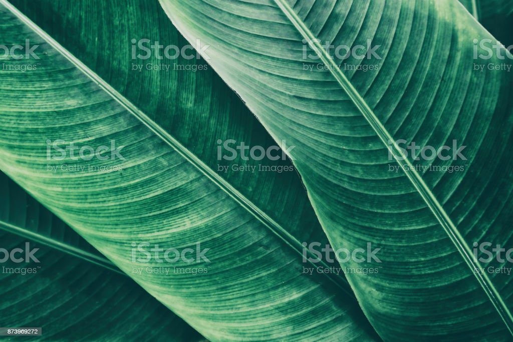 tropical palm leaf texture backgrounds royalty-free stock photo