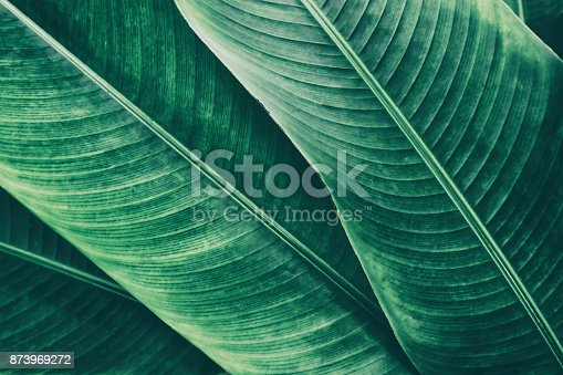istock tropical palm leaf texture backgrounds 873969272