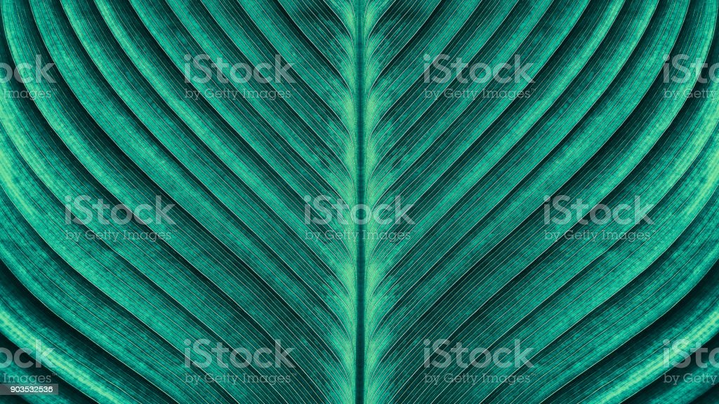 tropical palm leaf texture royalty-free stock photo